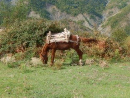 Hauptverkehrsmittel in den Bergen...